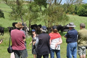 new zealand farmers and rancher services